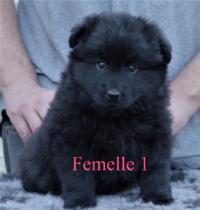 femelle 1